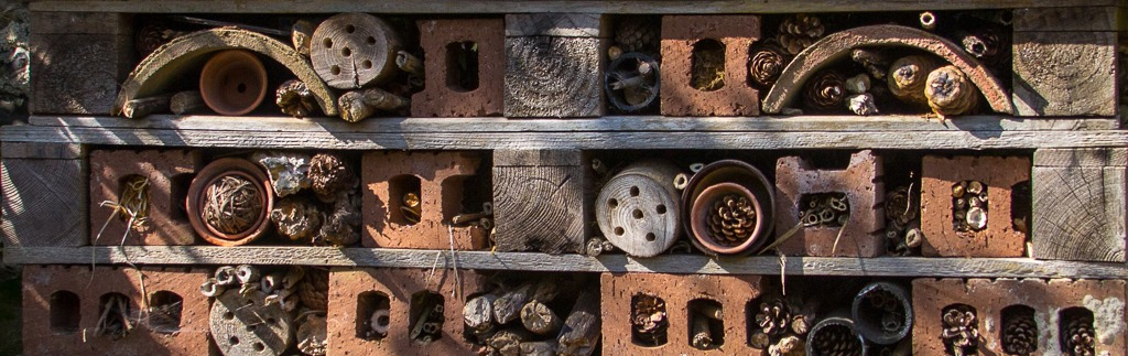 Insect hive