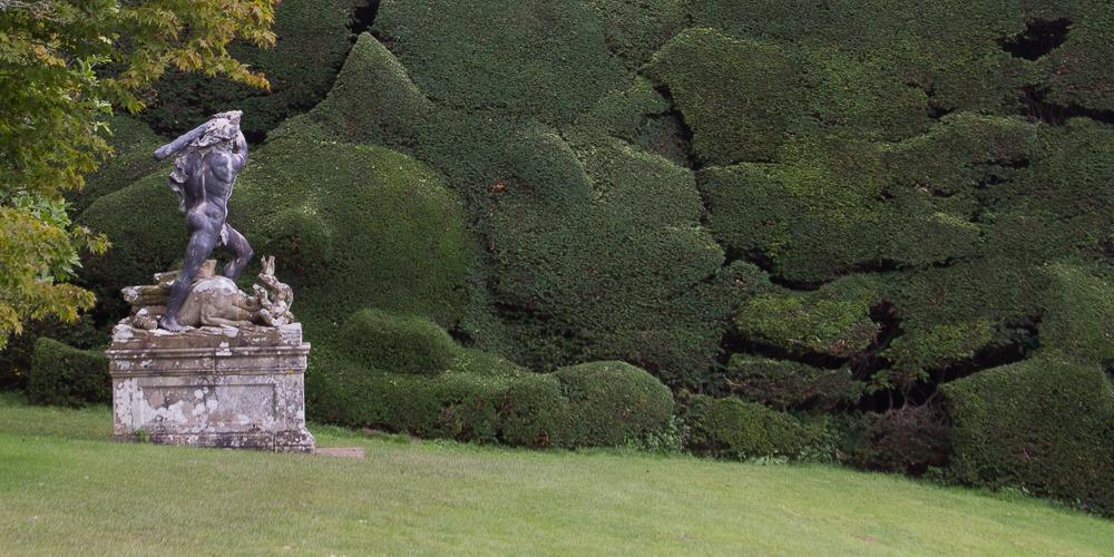 Mutated hedge