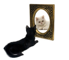 Cats In Mirror